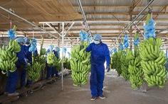 HAGL hướng tới mục tiêu xuất khẩu 1 tỉ USD trái cây