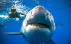 Đại dương ra sao nếu cá mập tuyệt chủng?