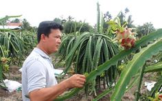 Việt Nam đứng đầu châu Á - Thái Bình Dương về sản lượng thanh long