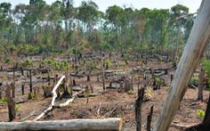 Phát hiện mất hơn 1.200 ha rừng ở Gia Lai