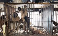 70% người Hàn nói không với thịt chó