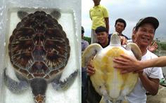 Bắt được rùa quý có người trả chục triệu không bán, đem thả về biển