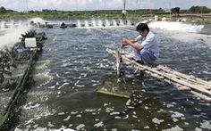 Dịch bệnh đe dọa ngành tôm