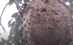 Video: Ong vò vẽ tấn công khiến nhiều người đi đường nhập viện