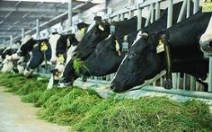 Trung Quốc sẽ nhập khẩu thêm sữa từ Việt Nam