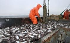Nga bắt 3 tàu cá Triều Tiên với hơn 250 ngư dân