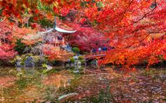 9 địa điểm tha hồ ngắm mùa thu ở châu Á