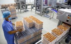 Indonesia 'diệt' 10 triệu quả trứng gà để cứu... gà