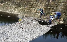 Vụ cá chết ở hồ Hòa Phú: hàm lượng oxy thấp hơn ngưỡng cho phép