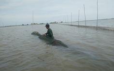 Nước thượng nguồn Mekong lên nhanh, mực nước ĐBSCL vẫn dưới báo động 1
