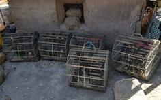 Chèo kéo du khách bán chim yến… phóng sinh