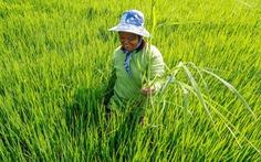 Hạn hán nghiêm trọng sẽ đẩy giá nông sản tăng cao tại Thái Lan