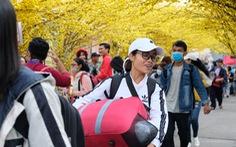 'Bến xe sinh viên' nhộn nhịp giữa rừng mai vàng