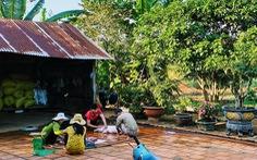 10 năm 'ở trọ Sài Gòn', lịch tết của tôi không thay đổi: về với vườn rau của mẹ