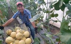 Những nhà nông trẻ 'bung hàng' vụ tết