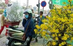 Mai tết Sài Gòn 'bay' đi Hà Nội, Campuchia