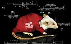 Vì sao chuột trở thành 'linh vật' trong nghiên cứu khoa học?