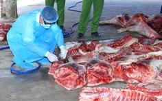 Bắt quả tang cơ sở thu mua heo chết về xẻ thịt bán ra thị trường