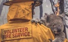 Thương đôi mắt koala buồn xa xăm trong cơn bão lửa nước Úc