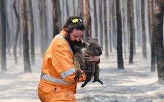 Số động vật bị chết trong cháy rừng Úc đã lên hơn 1,25 tỉ