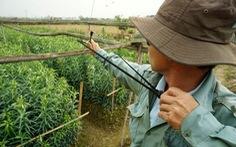 Chính quyền tỉnh Thừa Thiên Huế ra chỉ thị bảo vệ chim trời