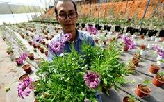 Hoa giống ngoại chưa tết đã hết hàng
