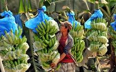 Cách nào để thành tỉ phú nông dân?