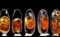 Ngắm thế giới nhỏ bé dưới kính hiển vi