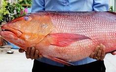 10 người nhập viện nghi ngộ độc do ăn cá hồng chuối
