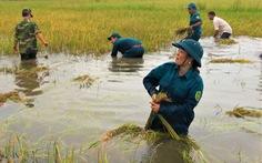Bộ đội giúp dân thu hoạch lúa ngập úng ngoài đồng