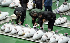 Nhật khai thác cá hiệu quả nhờ AI