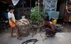 COVID-19 khiến người nghèo Myanmar phải ăn rắn, chuột qua ngày?
