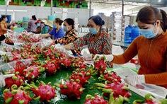 Có những lô thanh long xuất sang Thái Lan bị trả về do vượt tồn dư thuốc