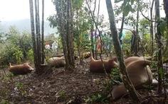 7 con bò bị sét đánh chết cùng lúc, sạt lở tiếp tục chia cắt nhiều xã tại Quảng Nam