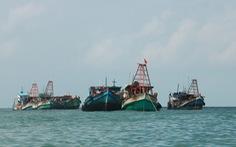 Xử phạt tiền tỉ hàng chục tàu cá vi phạm khi đánh bắt trên biển
