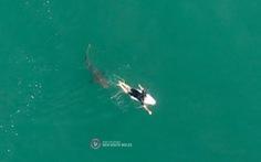 Cuộc chạm trán kịch tính với cá mập của cựu vận động viên lướt ván người Úc