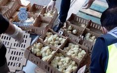 Hàng chục ngàn gà con bị bỏ rơi đến chết ở sân bay Tây Ban Nha