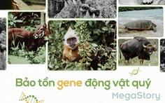 Câu chuyện bảo tồn gene động vật quý