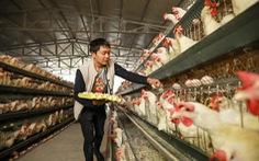 Từ gà con đến linh kiện, Trung Quốc vẫn phải nhập khẩu dài dài