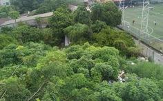 Sài Gòn nhớ nhớ thương thương - Kỳ 8: Lũy Bán Bích từng ngát hương ngâu