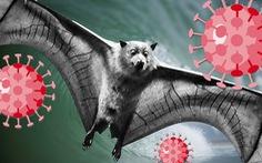 Nguy cơ đại dịch từ 850.000 virus lạ trên động vật