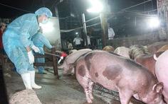 Sống ở thành thị nhưng vẫn có vi trùng mang gen kháng colistin dùng trong chăn nuôi