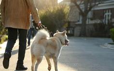 Tranh cãi quanh luật cấm dắt chó ra đường ở Trung Quốc