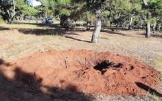 Gia Lai: Đào trộm thông hàng chục năm tuổi ở đồi cỏ hồng