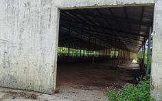 Điều chỉnh dự án nuôi bò 2.600 tỉ sang… nuôi heo với tổng vốn khoảng 250 tỉ đồng