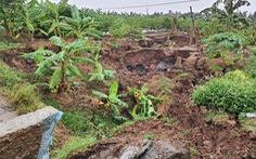 'Hố tử thần' rộng cả trăm mét vuông, nuốt chửng nhiều cây trồng