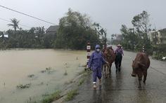 NÓNG ở Quảng Ngãi: 'Nước lên thấy rõ luôn. Tôi cõng mẹ chạy lũ, còn đồ đạc bỏ hết'