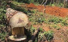 Đại biểu nghi ngờ thông tin 'diện tích rừng tăng lên'
