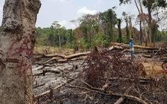 Gia Lai mất gần 8.000ha rừng tự nhiên như thế nào?
