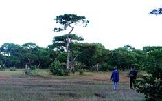 Rừng Đak Đoa 174ha thông cổ thụ đẹp như mơ có nên biến thành sân golf?